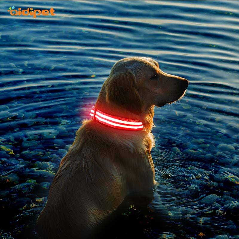 -Aidi-c17 Metal Buckles Usb Rechargeable Led Dog Collar-shenghong