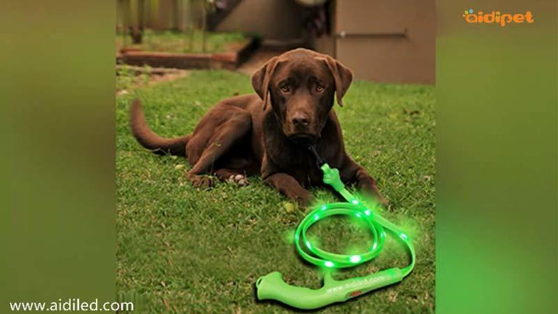 AIDI-L8  Safety Glow Dog Leash Video