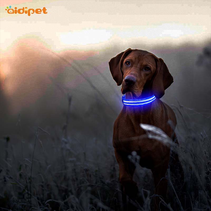 AIDI-Best Light Up Dog Collar | Aidi-c18 Metal Buckles Usb Rechargeable