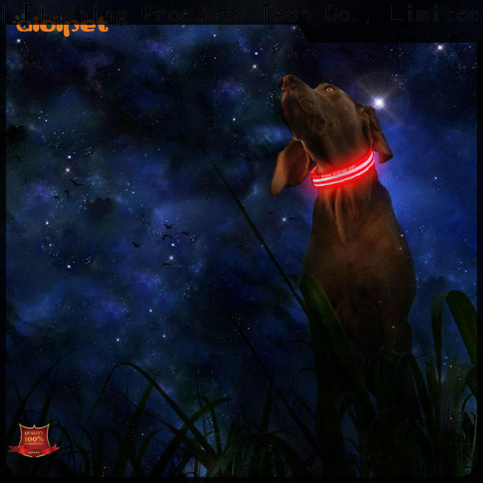 durable luminous dog collar design for outdoors