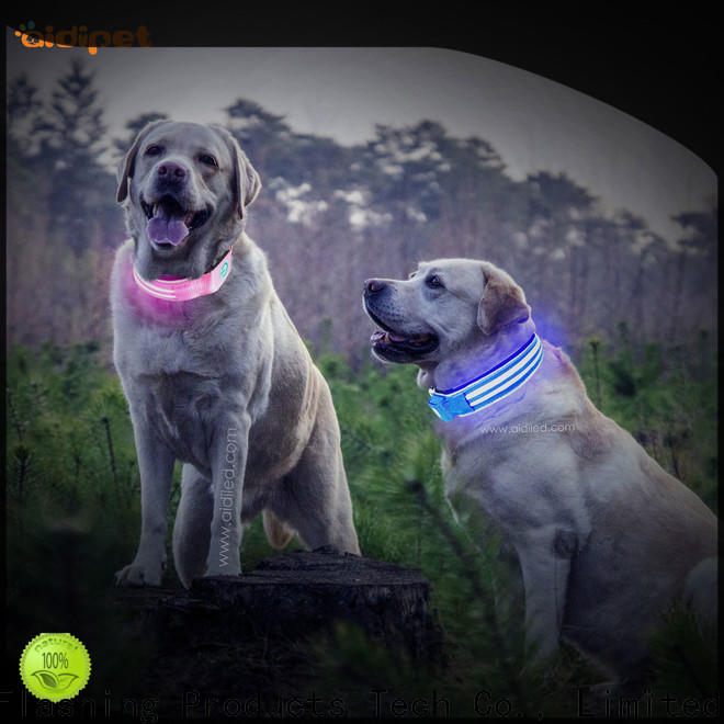 durable night dog collar design for park