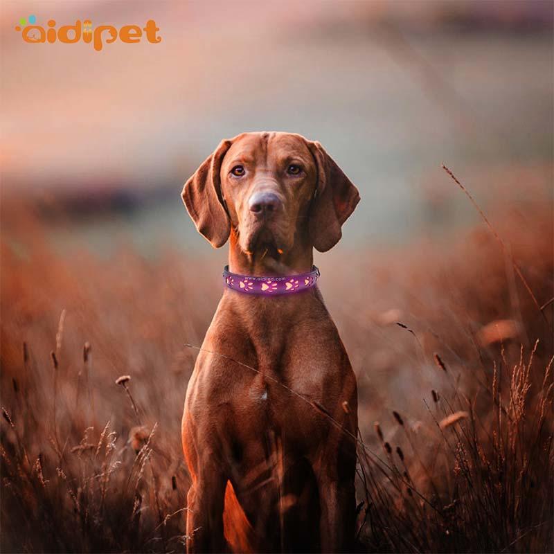 AIDI-Best Waterproof Lighted Dog Collars Aidi-c20 Wholesale Pet-2