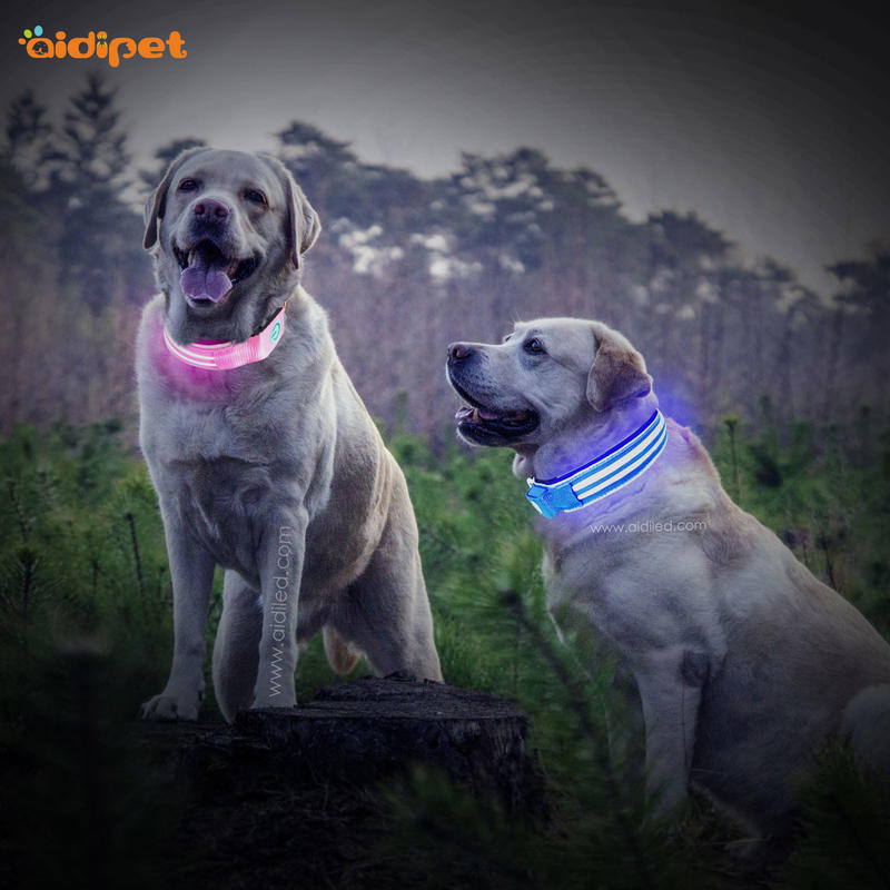 night lite up dog collars rgb AIDI