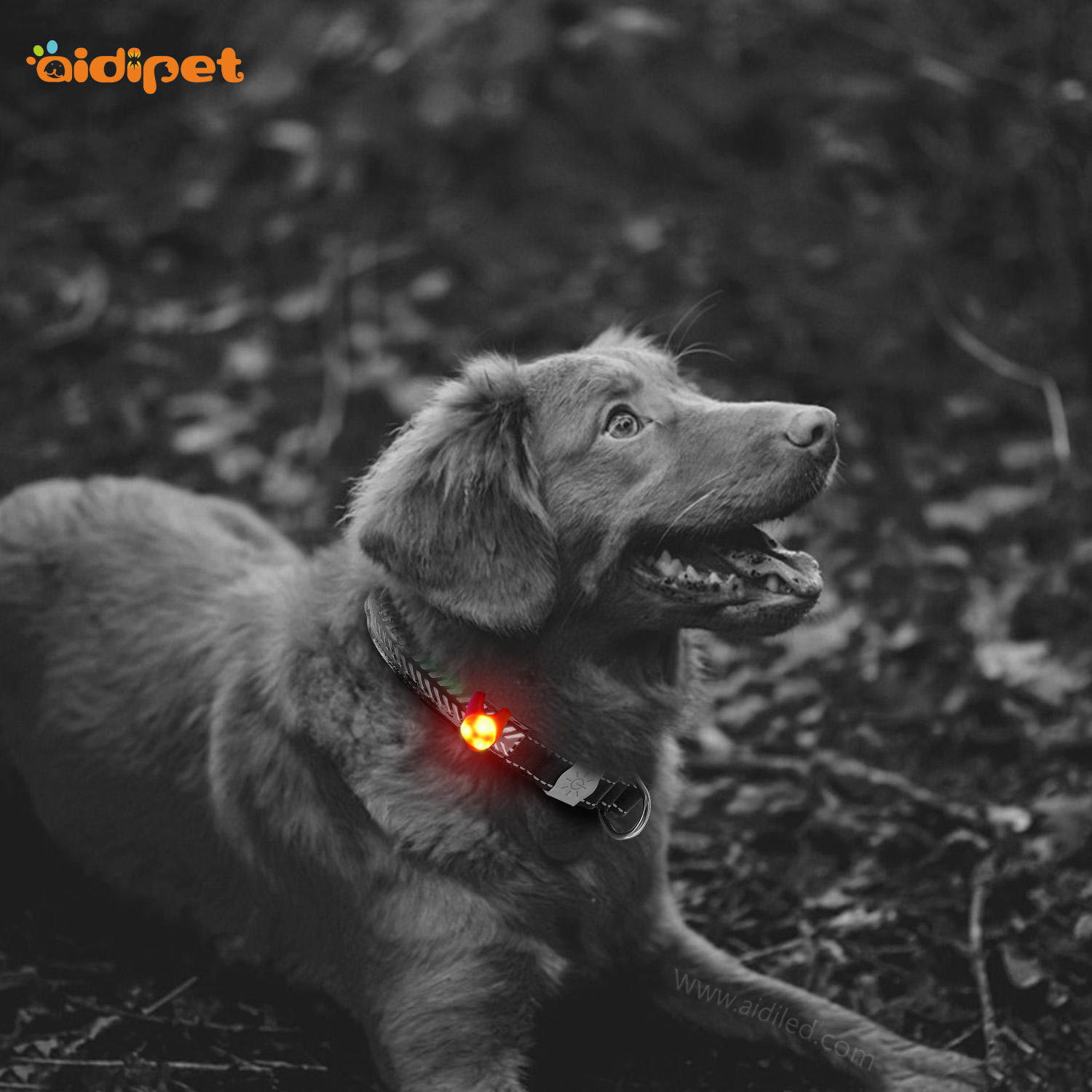 led silicone pet light AIDI-M1