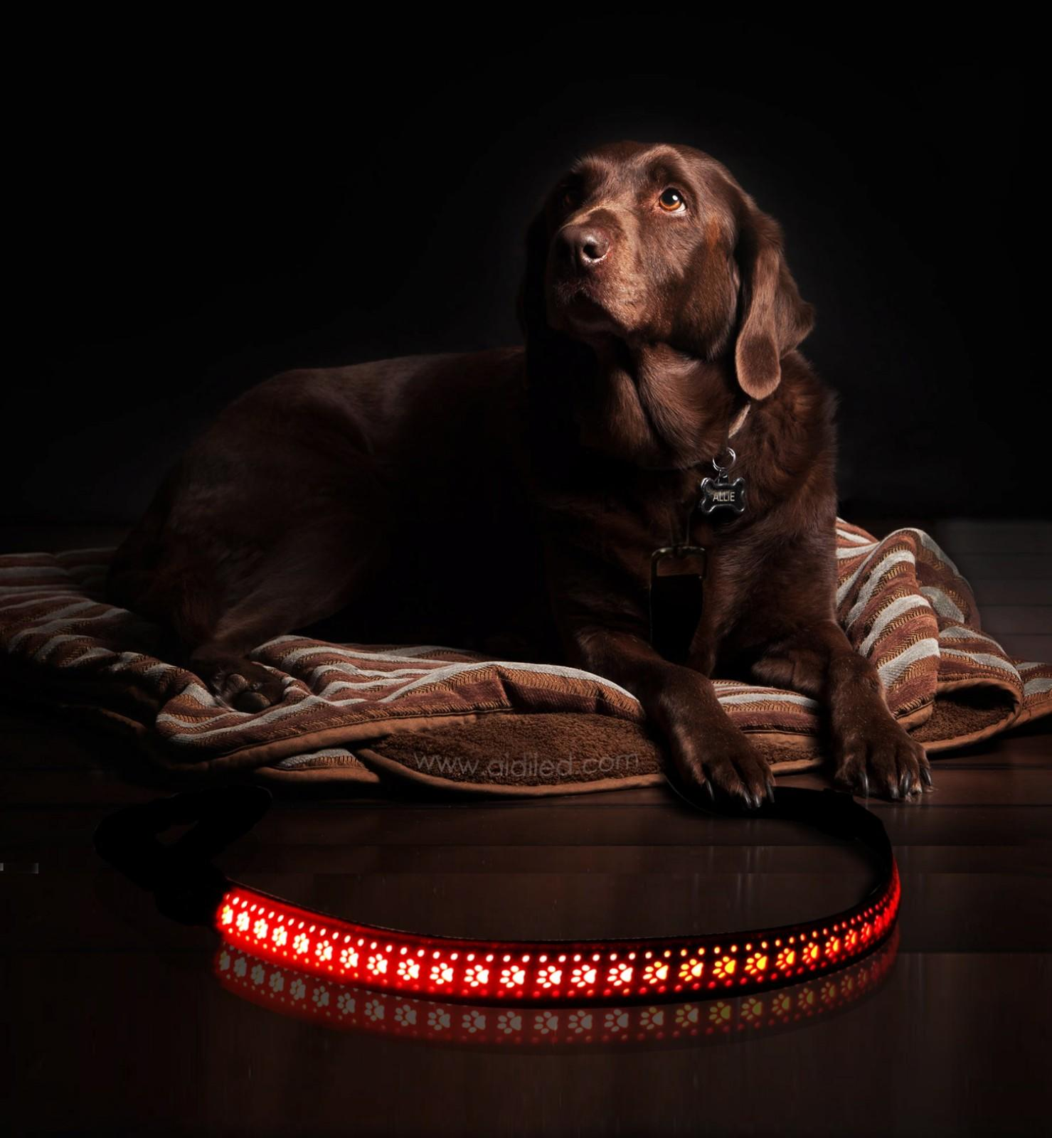 leather lighted dog leash design for outdoors