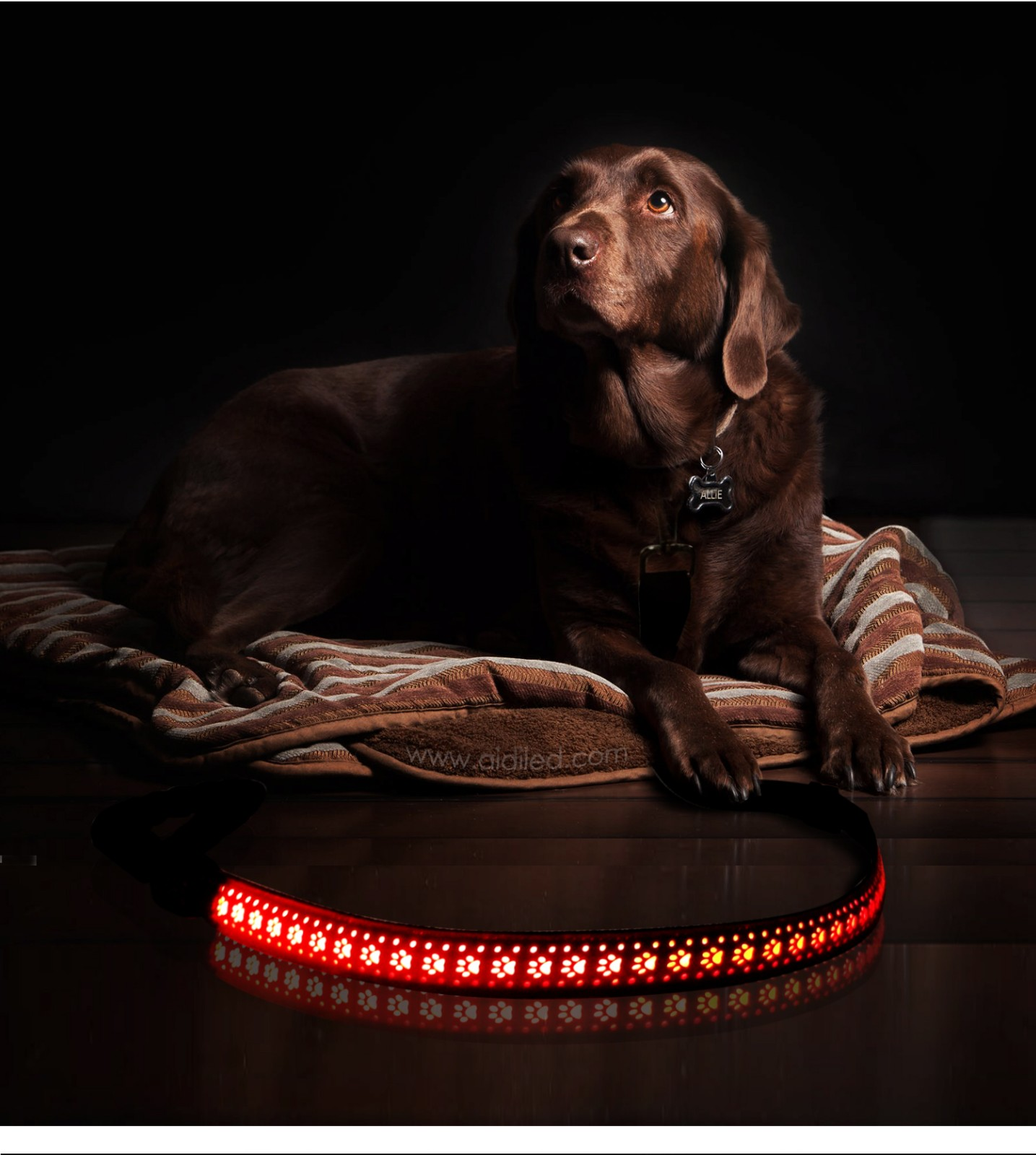 AIDI-High-quality Best Led Dog Leash | Led Pu Leather Dog Leash Aidi-l6-8