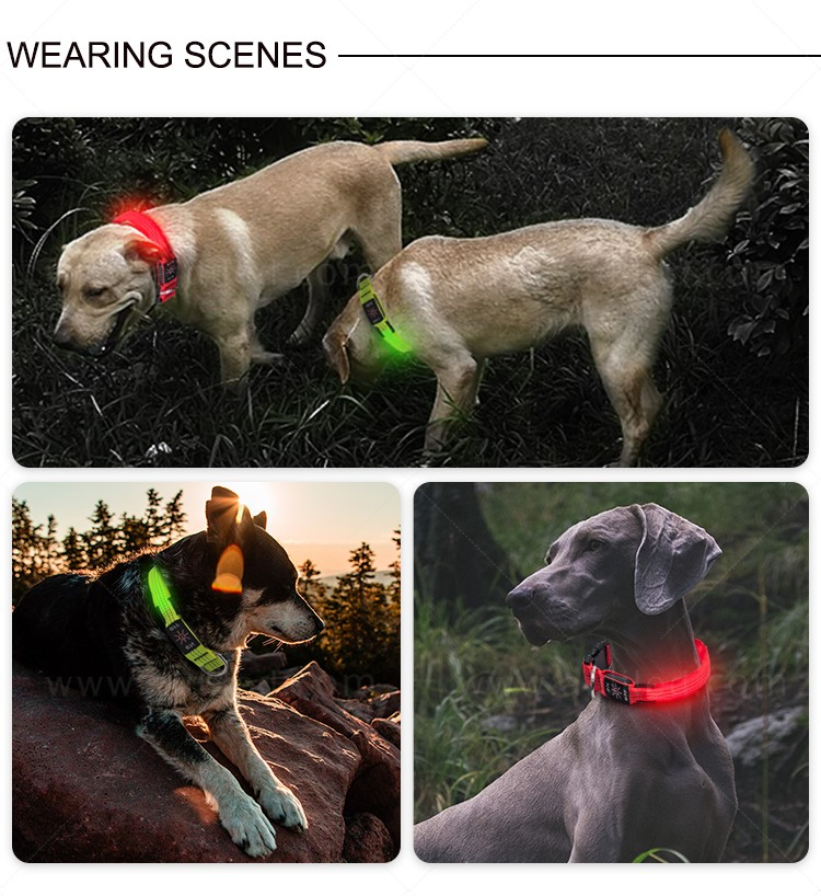 filament led dog collar waterproof with good price for pet-13