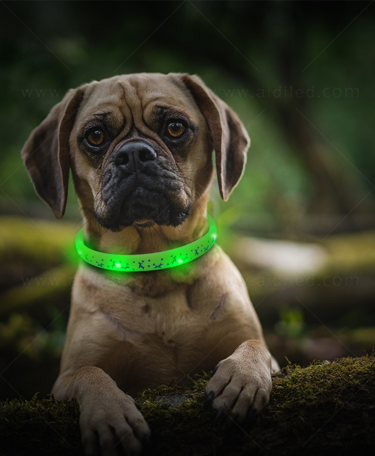 nylon best glow in the dark dog collar design for park-3