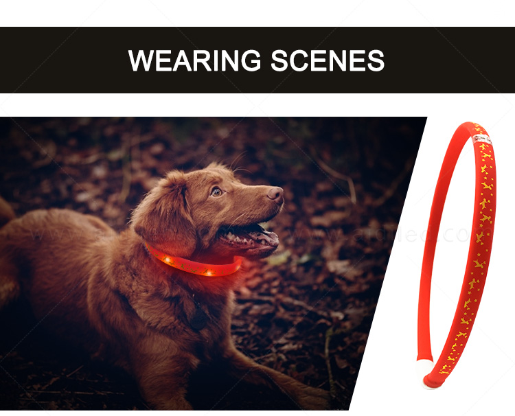 nylon best glow in the dark dog collar design for park-12