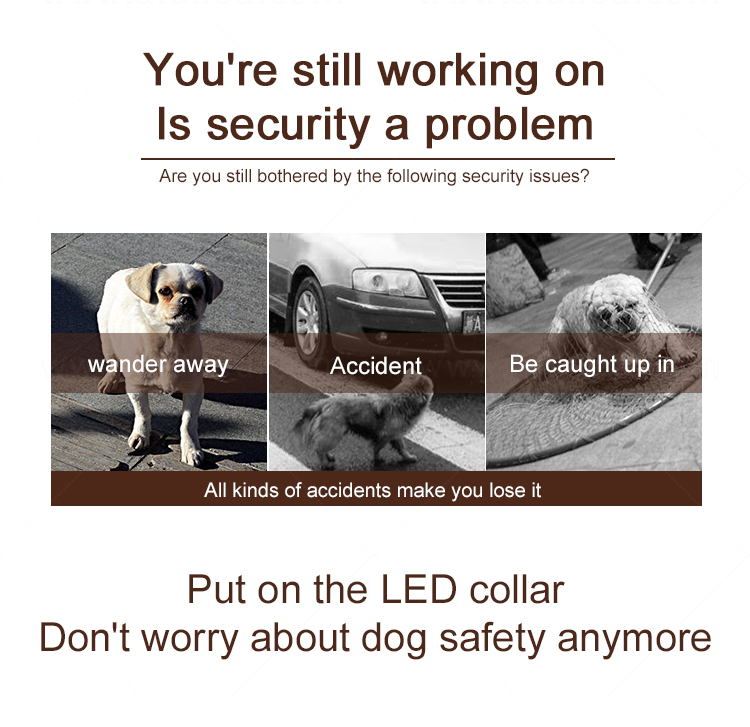 AIDI remote led dog collars design for outdoors-6