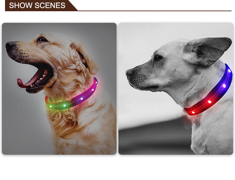 AIDI remote led dog collars design for outdoors-12