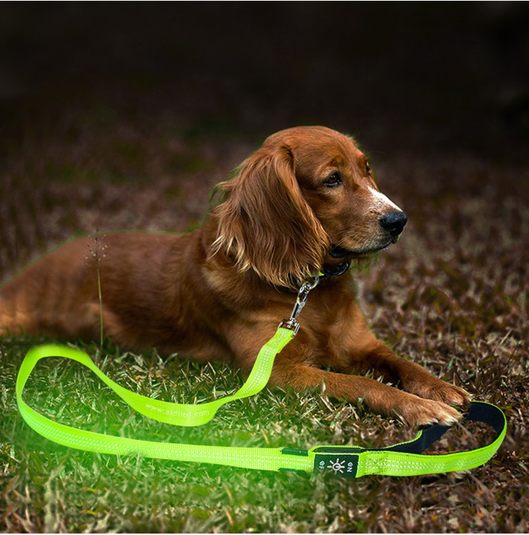reflective best led dog leash inquire now for park-7