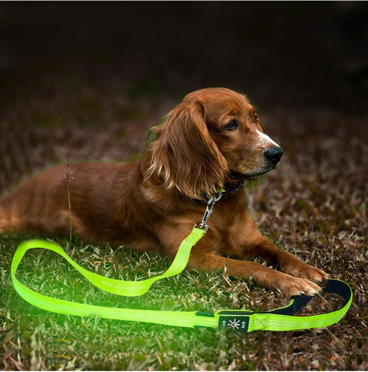 reflective best led dog leash inquire now for park