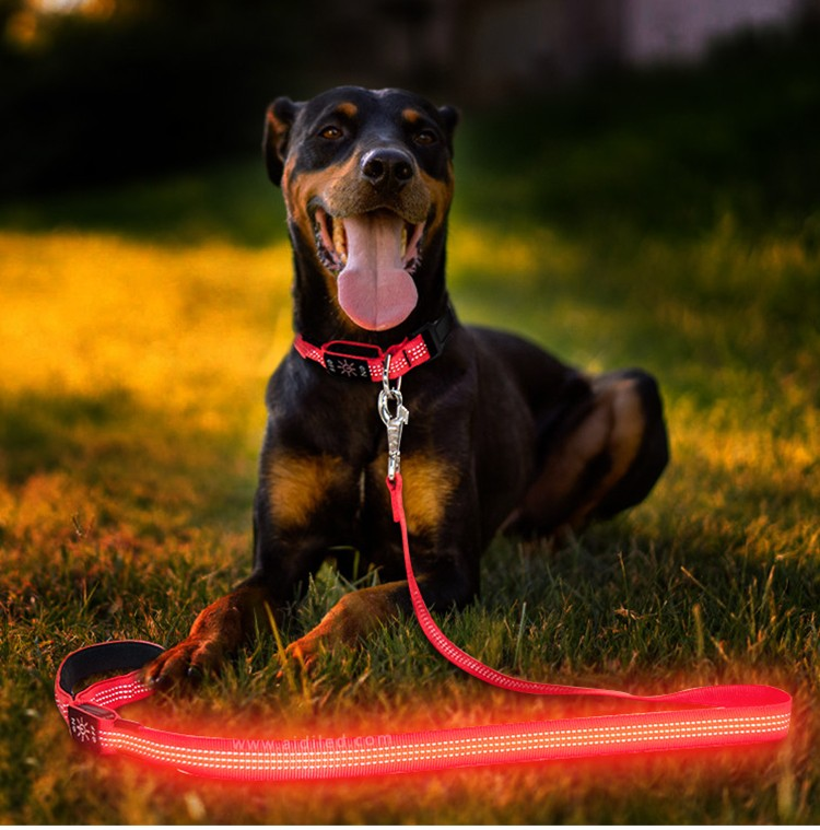 reflective best led dog leash inquire now for park-6