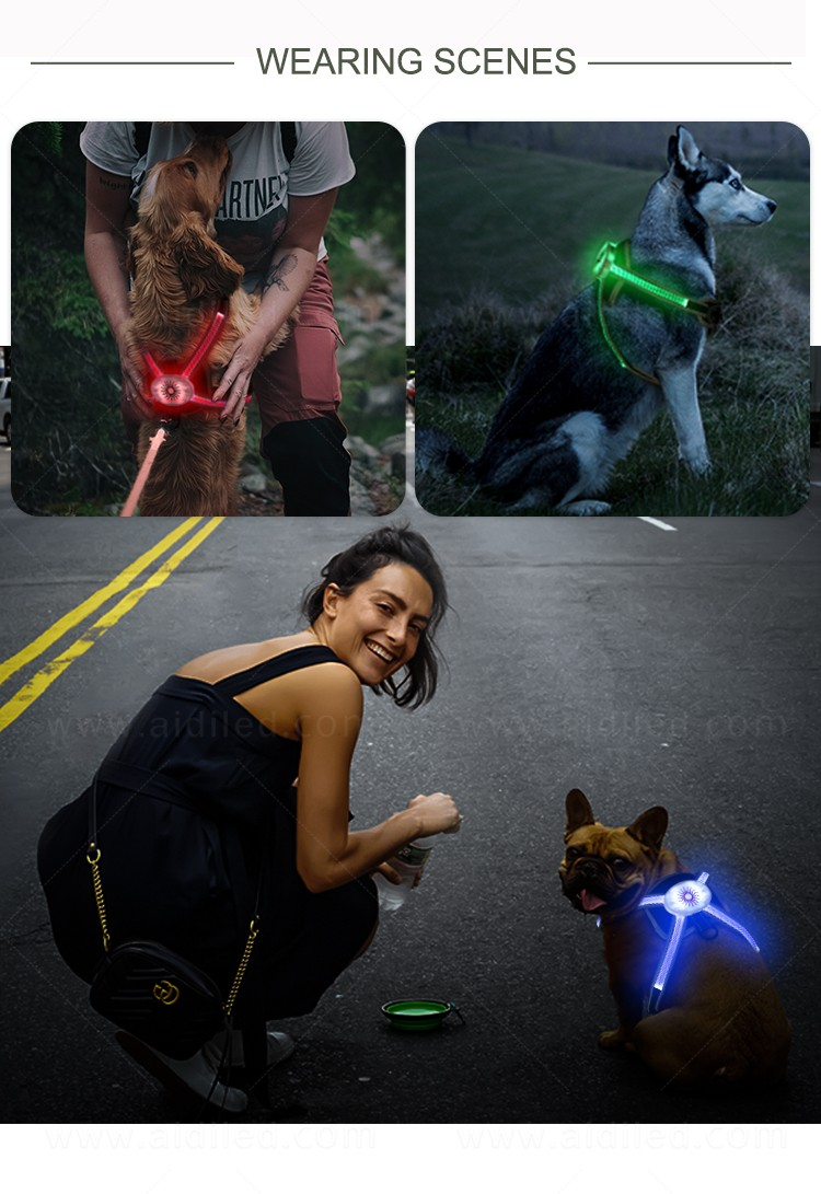 AIDI glowing dog harness customized for street-13
