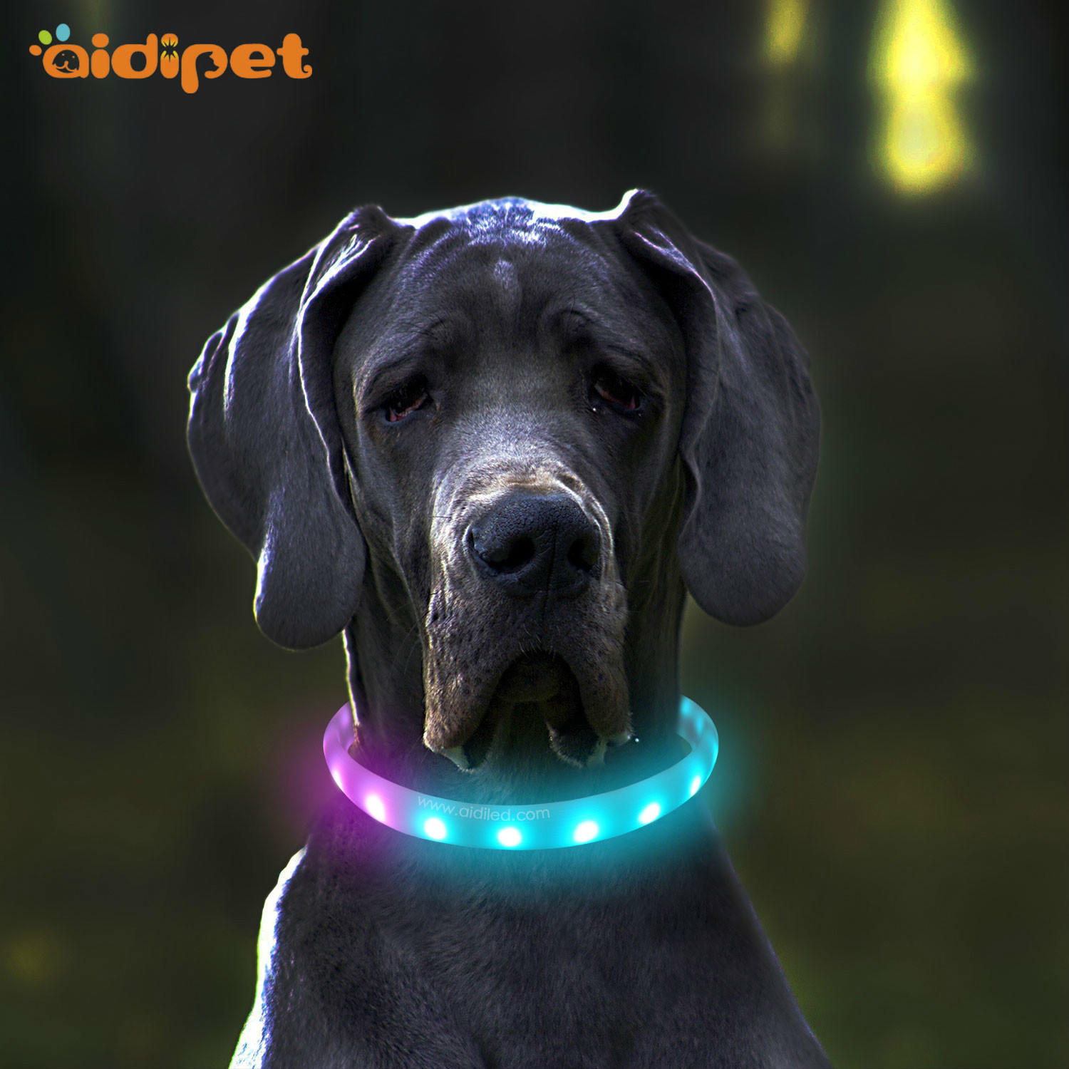 C6 Rainbow Color Led Dog Collar