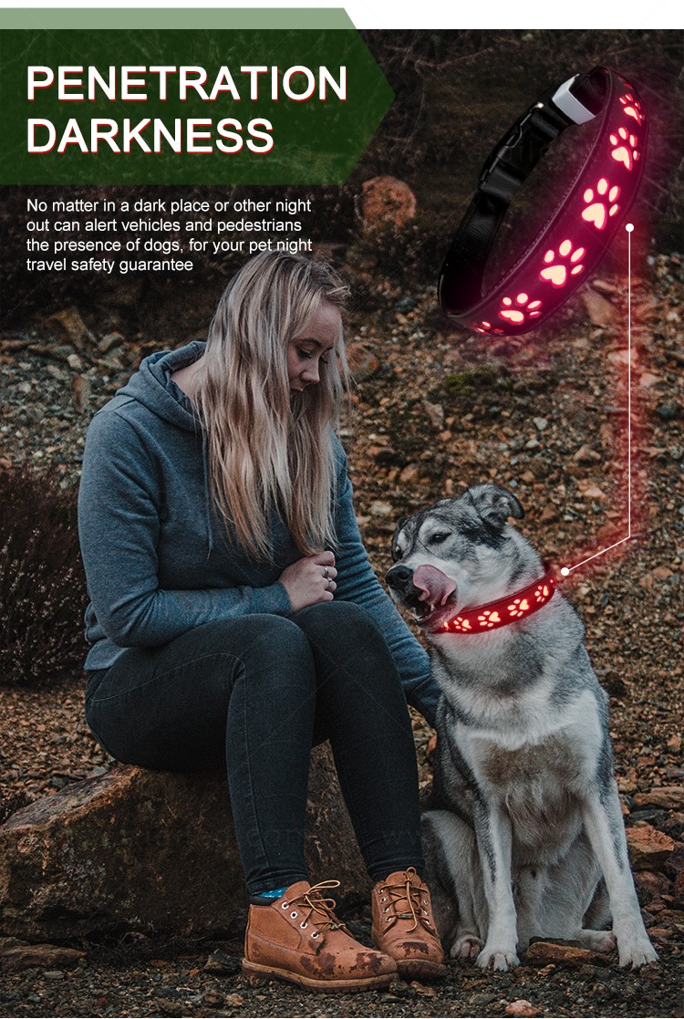 AIDI waterproof best glow in the dark dog collar inquire now for walking-15