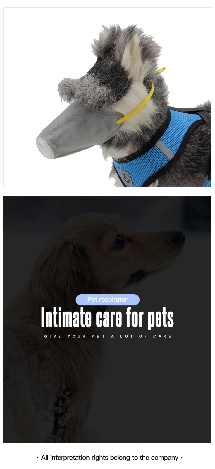 AIDI dog collar accessory supplier for park-12