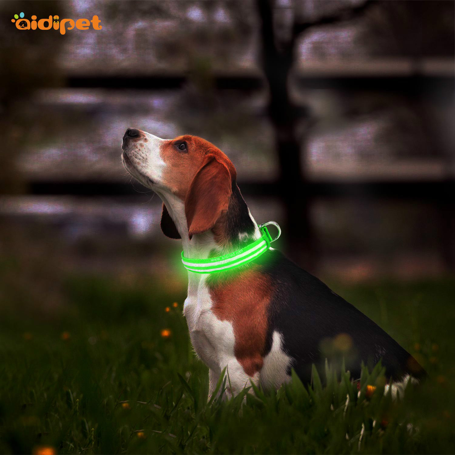 news-A Light Up Pet Collar Is A Fun Toy For Your Dog-AIDI-img