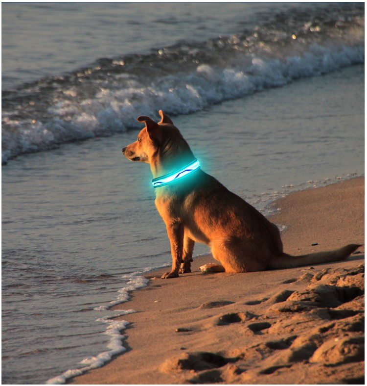 news-AIDI-Cool Dog Supplies For You and Your Pet-img