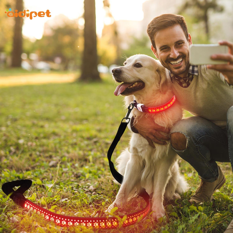 news-Led Dog Glow Leash Reviews Tips-AIDI-img