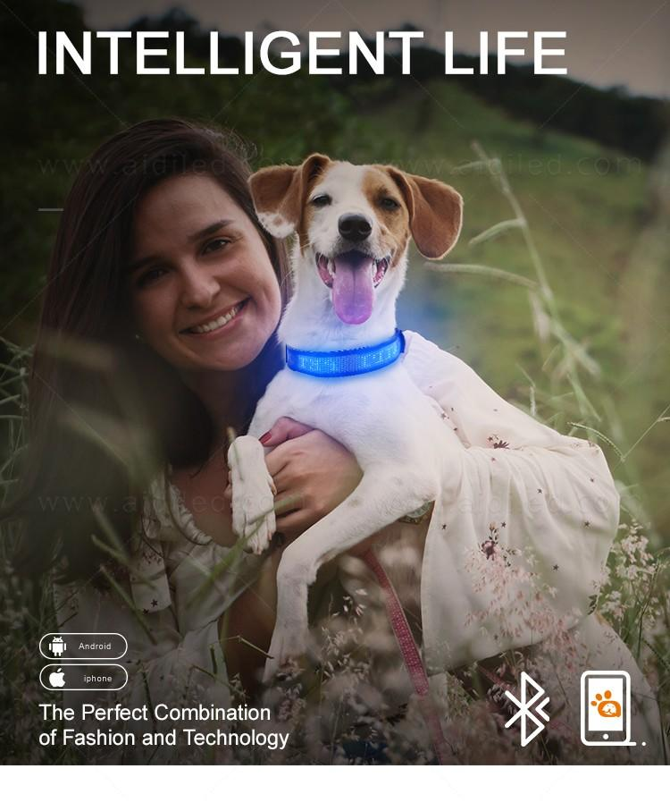 AIDI remote night dog collar design for pet-1
