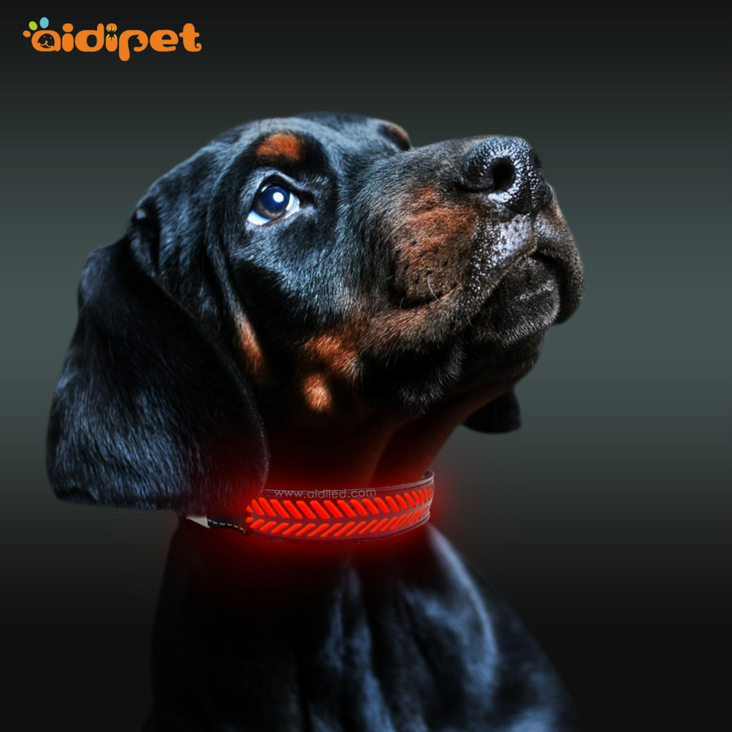 lighted dog collar with light attached super for outdoors AIDI
