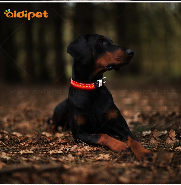 rechargeable led flashing dog collar design for park-12