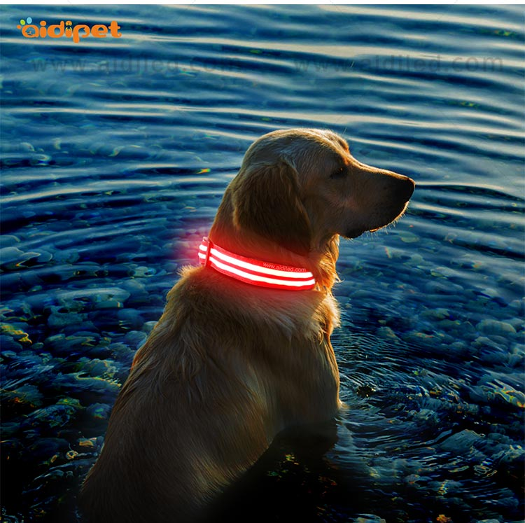 lite up dog collars for outdoors AIDI-11