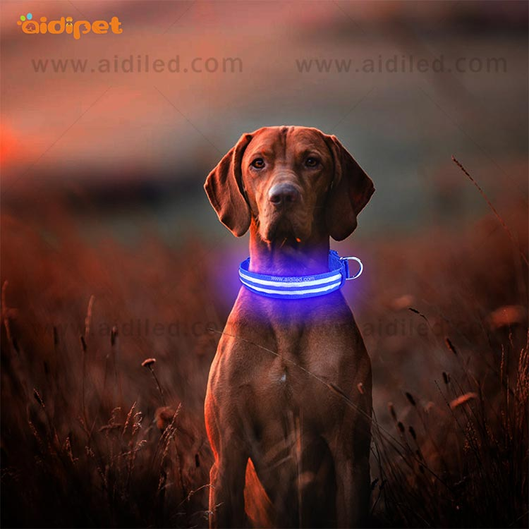 lite up dog collars for outdoors AIDI-10