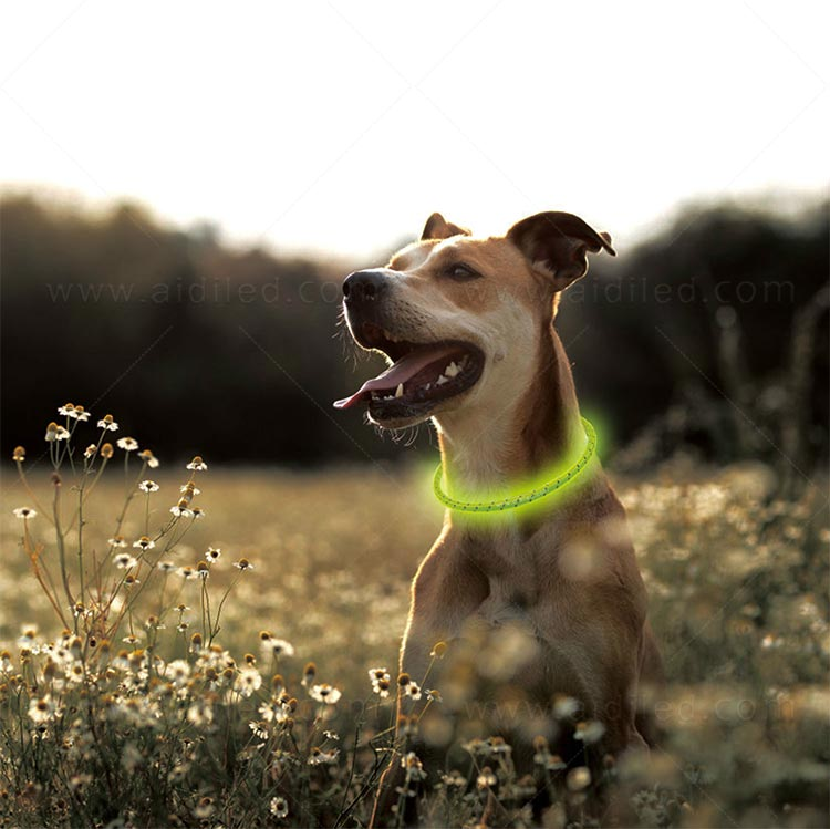 AIDI filament led dog collar waterproof design for pet-13