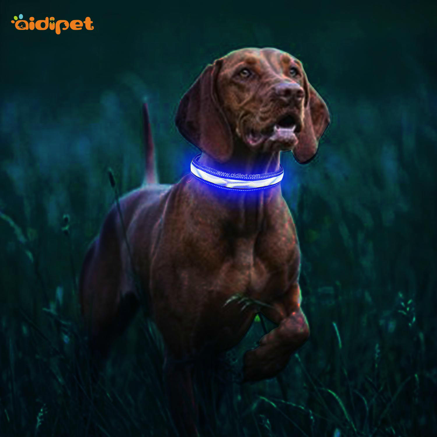 AIDI light up dog collar rechargeable with good price for outdoors