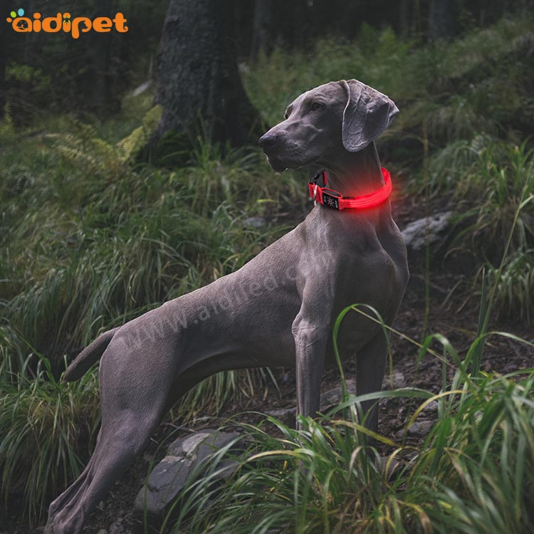AIDI-Find Led Dog Collar Waterproof Led Christmas Printing Dog Collar-1