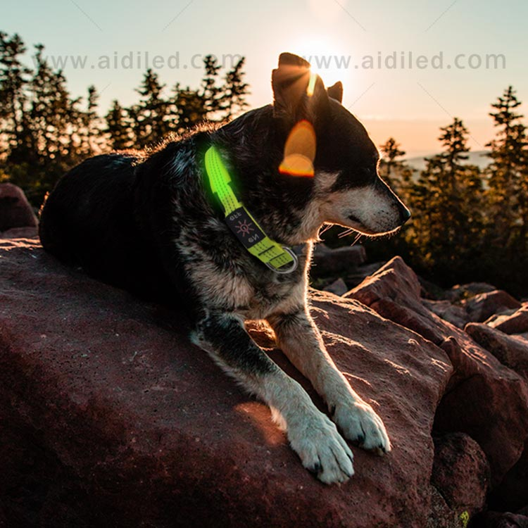 AIDI dog collar lights waterproof with good price for pet-12