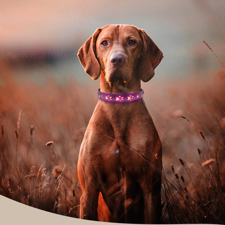 AIDI-Best Waterproof Lighted Dog Collars Wholesale Pet Dog Led Collar-2