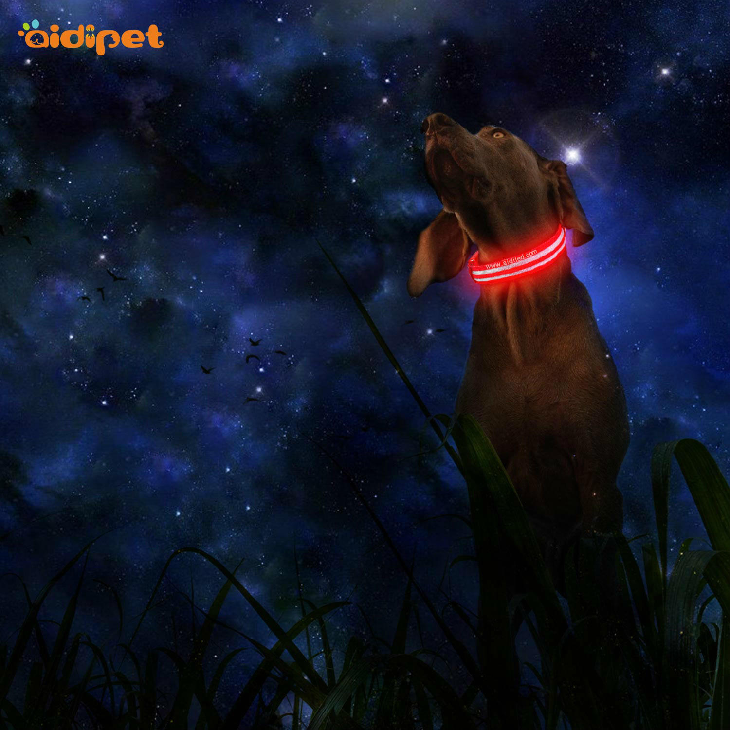 AIDI-C18 Metal Buckles USB Rechargeable LED Light Up Dog Collar