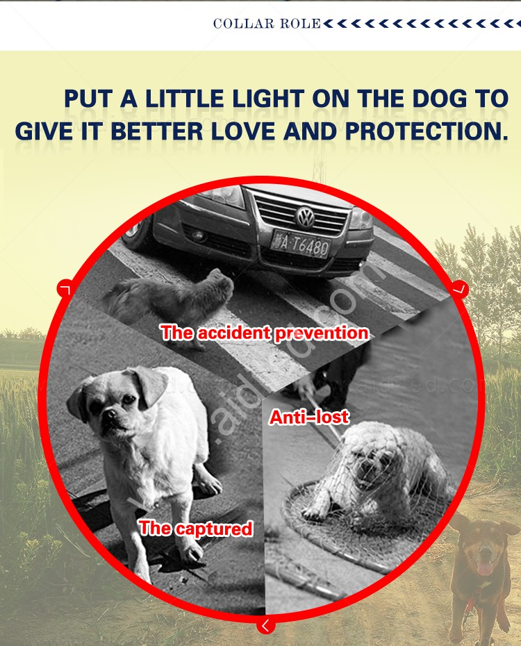 reflective lighted dog leash with good price for outdoors-4
