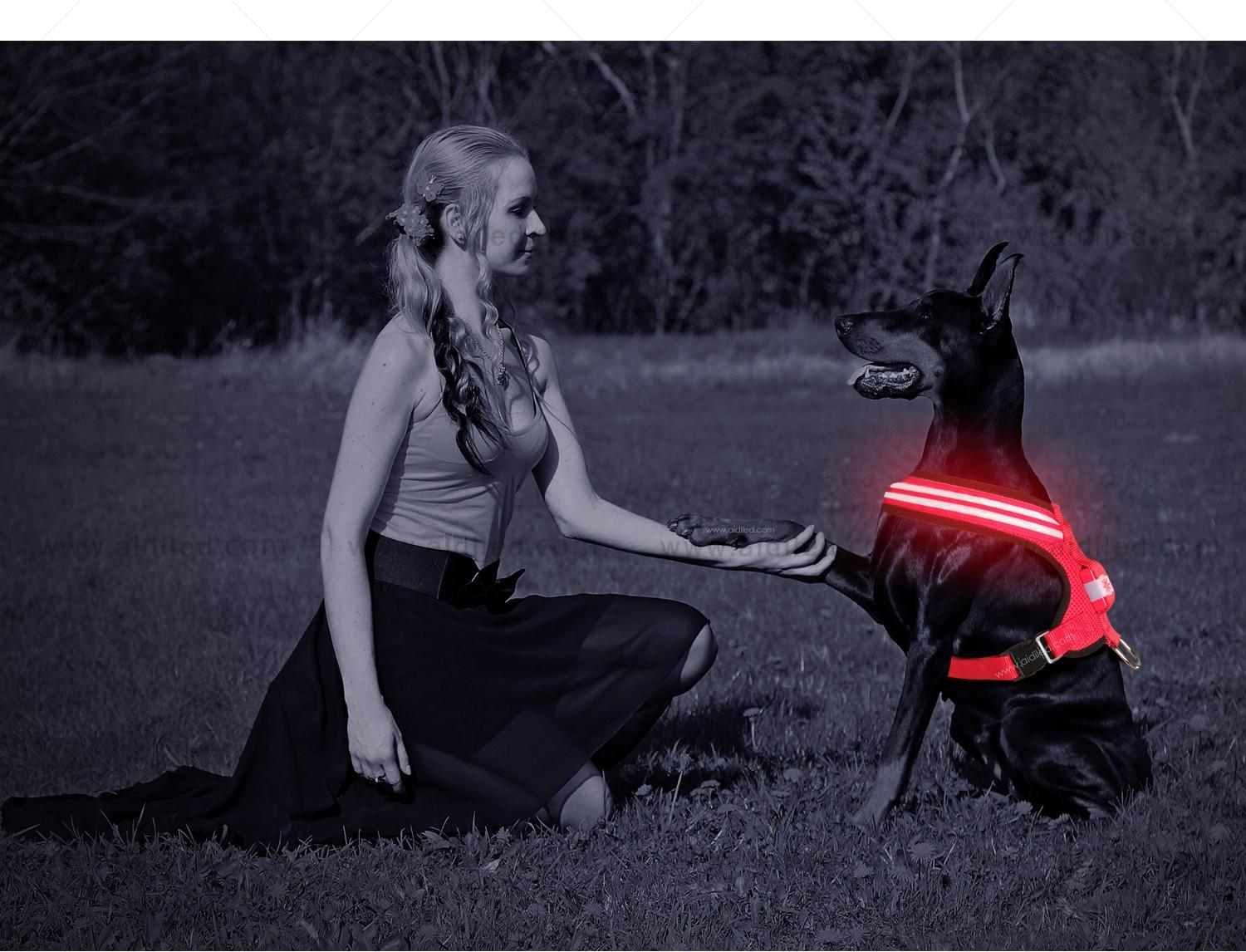 AIDI light up dog harness manufacturer for outdoors