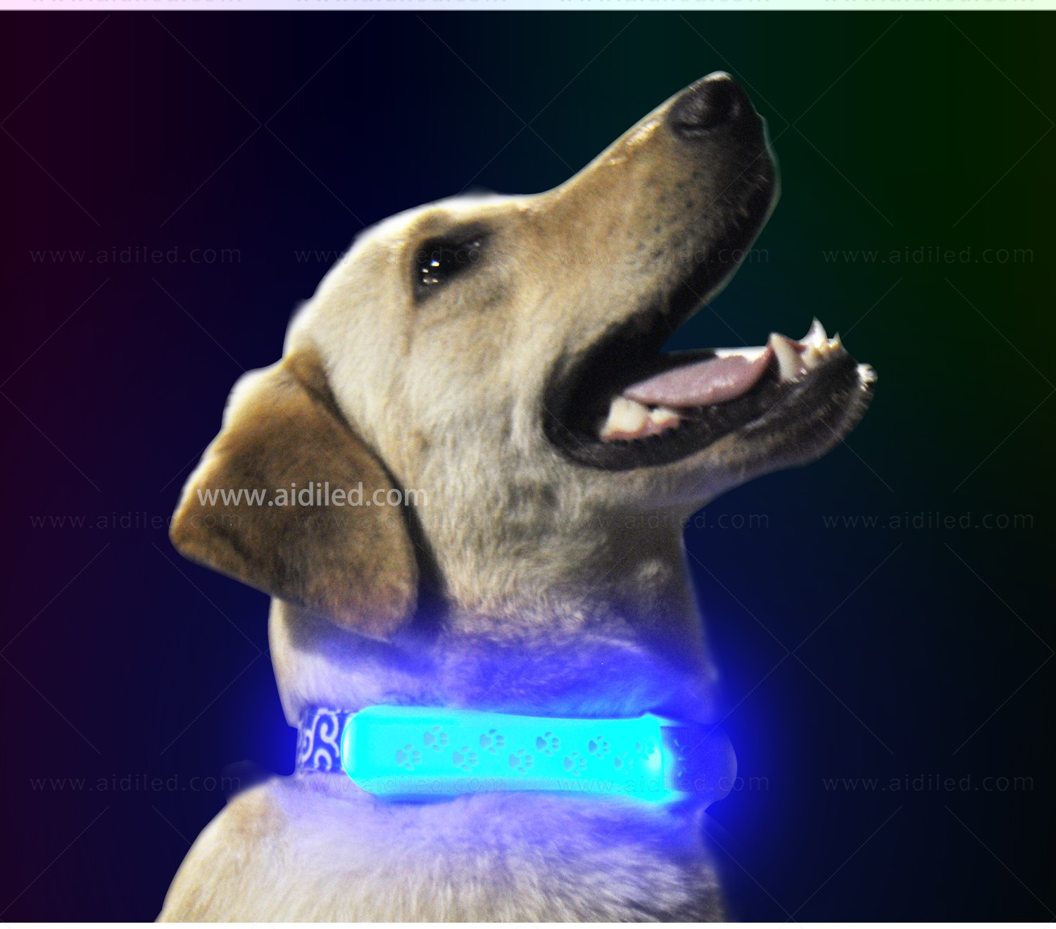 dog collar safety light for park AIDI-8