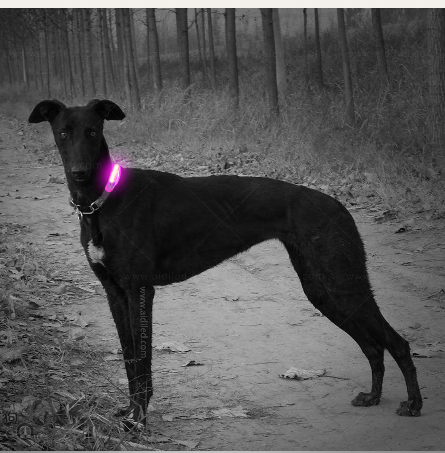 AIDI-Professional Pet Collar Accessories Dog Collar Safety Light-4
