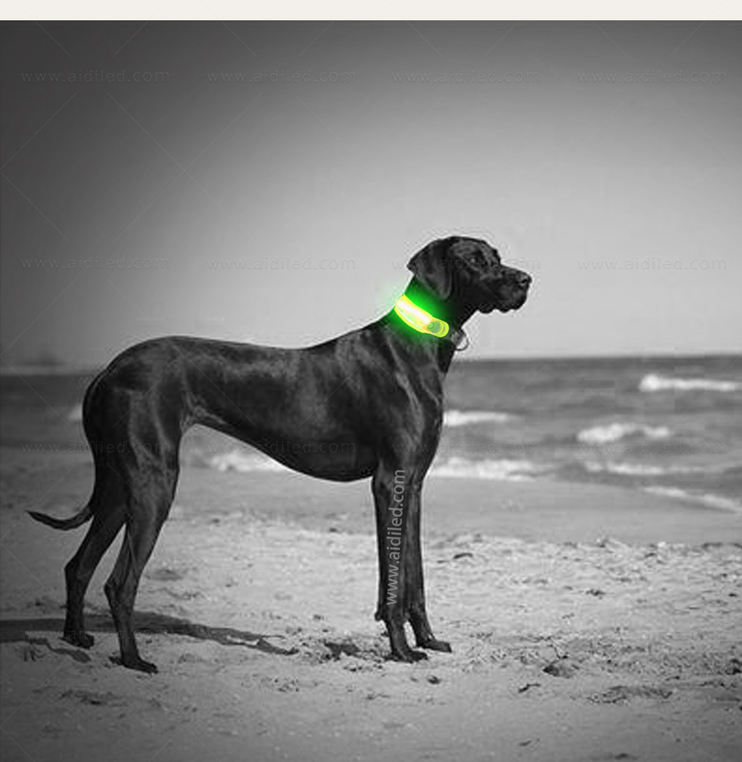 dog collars and accessories wholesale for AIDI-6
