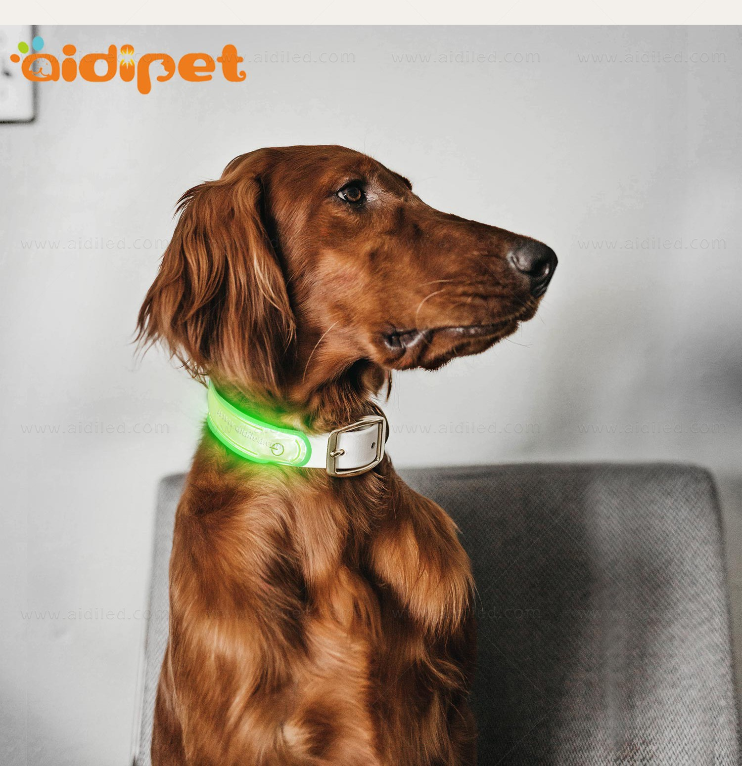 AIDI-Professional Pet Collar Accessories Dog Collar Safety Light-6