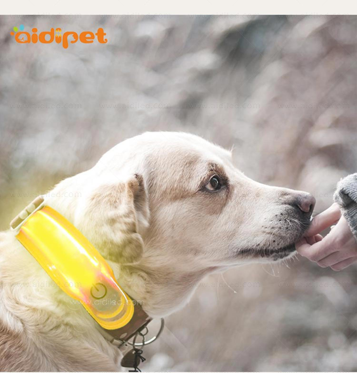 dog collars and accessories wholesale for AIDI-8