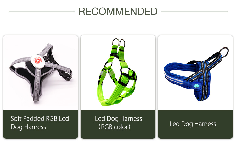 AIDI glowing dog collar customized for outdoors-15