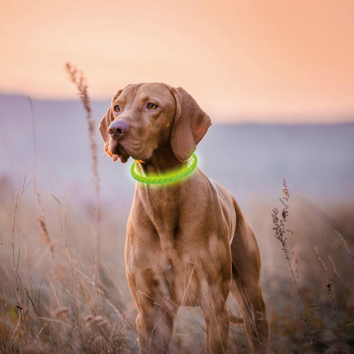 AIDI filament led dog collar waterproof design for pet-2